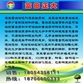 出口级粉状玉米蛋白粉 7