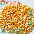 Expanded corn flour