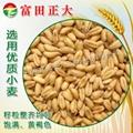 膨化小麦粉 2