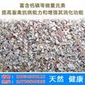 Shell powder 6