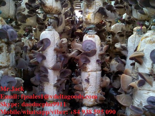 Wood ear mushroom (dried black fungus) from Vietnam 4