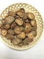 Dried Shiitake mushroom from Vietnam 2