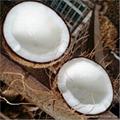 New Ariival  Fresh Coconut Semi-Husked