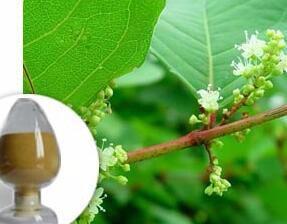 Whosale price bulk pure natural trans resveratrol 50% 1