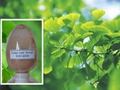 Ginkgo biloba extract 24%/6% CP2005