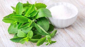 Nature sweetner stevia extract   2