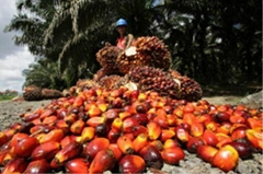 Palm oil and Sunflower oil