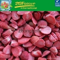 Cheap price Good Quality frozen
