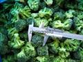 IQF Grade A green frozen broccoli spears cheap price 3