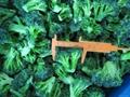 IQF Grade A green frozen broccoli spears cheap price 5