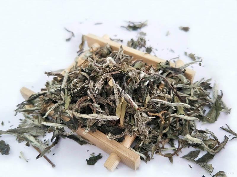 Chinese Premium non-fermented White Tea BaiMuDan White Poeny 1