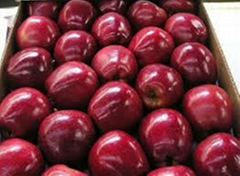 new crop South Africa fresh red delicious fuji apple exporter