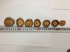 edible dried shiitake mushroom