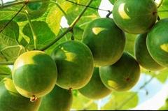 Natural Sweetner Organic Mogroside V