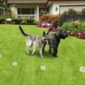 新款寵物訓練電子圍欄  2