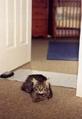 低價批發寵物電子墊