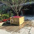 防腐木花盆 4