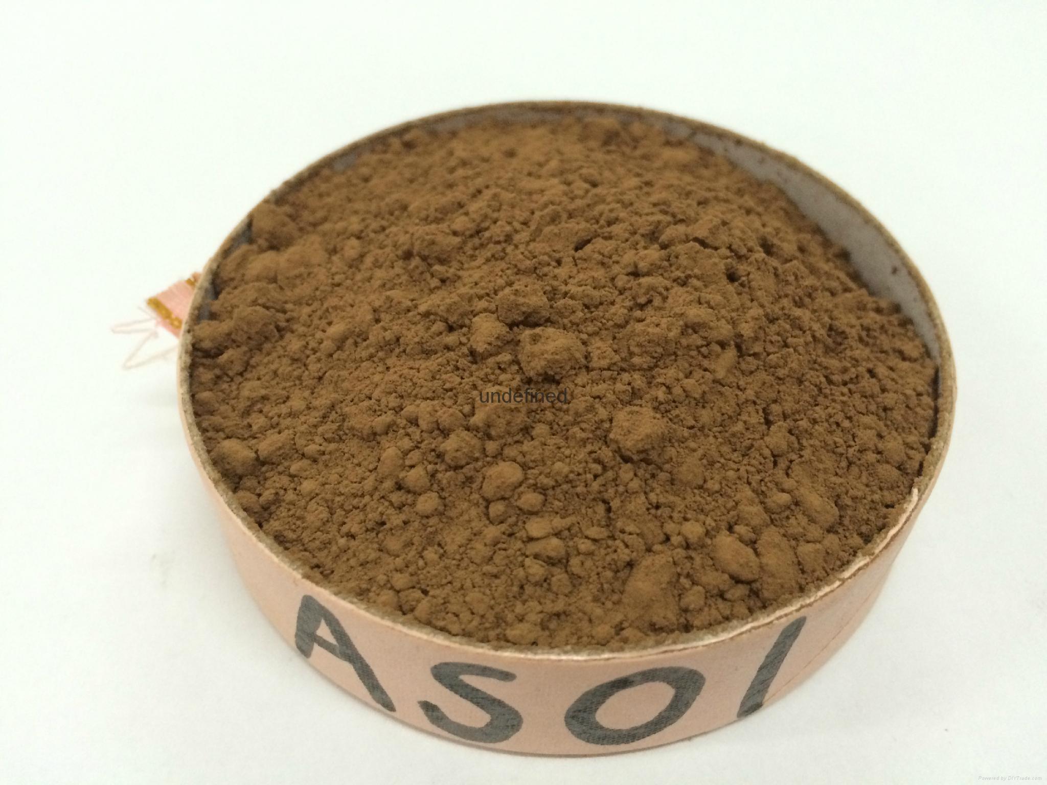 碱化可可粉 1