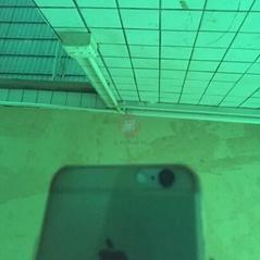 不锈钢平板镜面翡翠绿