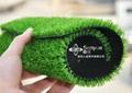10mm景觀草深綠淺綠 2
