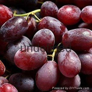 供應賓川紅提葡萄 1
