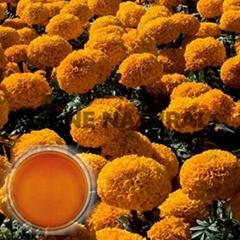 Marigold Oleoresins Co2 Extracted