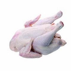 成都無公害雞肉批發綠色雞肉批發