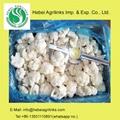 Frozen IQF  Cauliflower