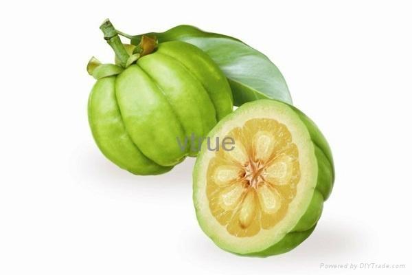 Garcinia mangostana 1