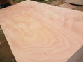 供应优质胶合板包装板托盘板 2