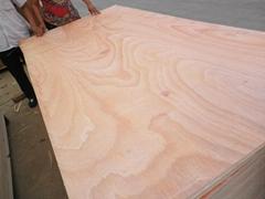 供应杨木红面15mm包装板胶合板托盘板
