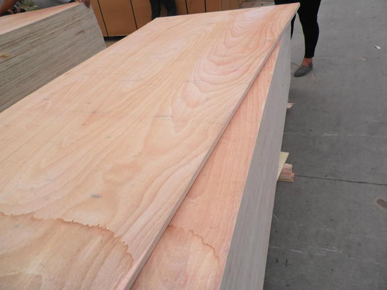 供应杨木红面15mm包装板胶合板托盘板 2