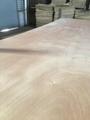 供应杨木红面15mm包装板胶合板托盘板 5