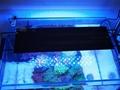 Aquarium Lighting With Options For Both