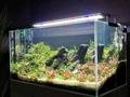 54 Watt Aquarium LED Lighting System For