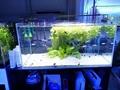 LED Aquarium Lighting 72 Watts for