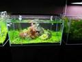 LED Aquarium Light Fish Tank Hood Marine