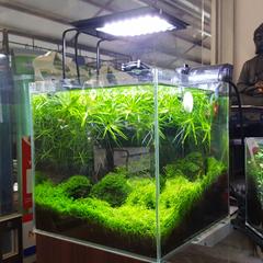 Aquarium Aqua LED Light Lamp Sea Marine Fish Coral Tank Blue White