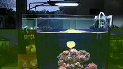 Aquarium Light LED For Marine Fish Tank Lighting Saltwater