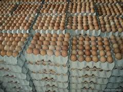 White & Brown Fresh Table Chicken Eggs