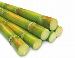 Fungal Invertase Inverted Sugar Enzyme