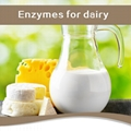 Lactase or Galactosidase Enzyme for