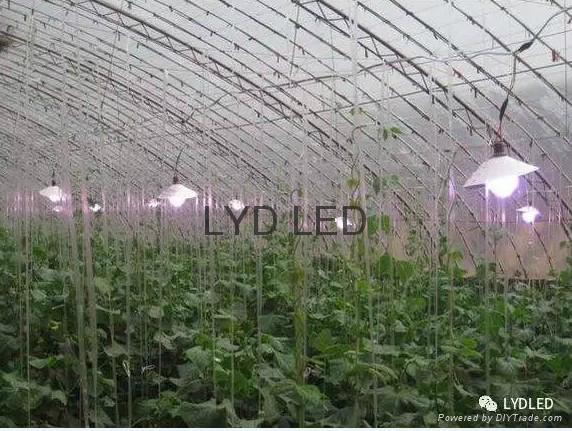 樂億迪定製LED植物生燈燈 3