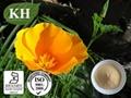 California Poppy Extract  Alkaloid  0.6%
