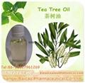 廠家生產單方精油互葉白千層油 茶樹油 日用化妝品原料供應 2