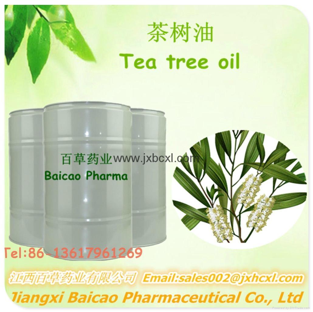 廠家生產單方精油互葉白千層油 茶樹油 日用化妝品原料供應 1