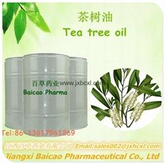 廠家生產單方精油互葉白千層油 茶樹油 日用化妝品原料供應