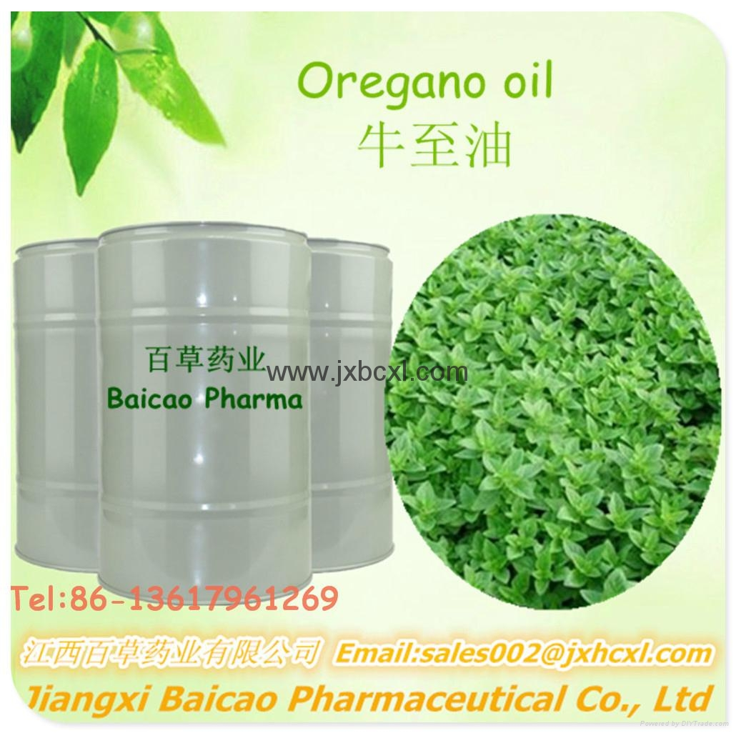 Pure Oregano oil with carvacrol for feed additive 1