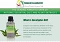廠家供應天然 桉葉油 桉葉素