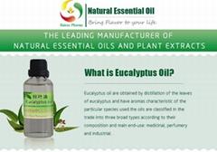 廠家供應天然 桉葉油 藥用標準 桉葉素